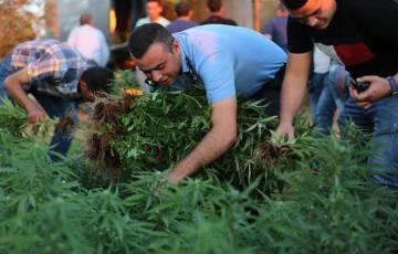 ضبط مشتل لزراعة المخدرات في نابلس