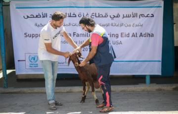 غزة: أونروا تبدأ بتوزيع لحوم الأضاحي على 4400 عائلة وفق هذه الشروط