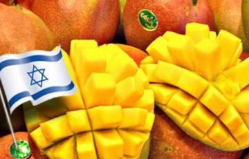 صورة: كيلو المانجا في إسرائيل بـ 100 شيكل!